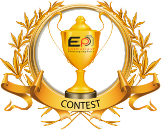 Child Photo Contest Voting